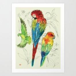 Parrot & Co Art Print