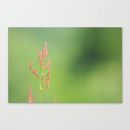 Reddish flower on a green Canvas Print
