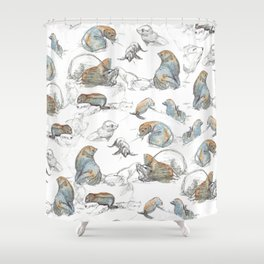 sketch of New zealand seals Shower Curtain