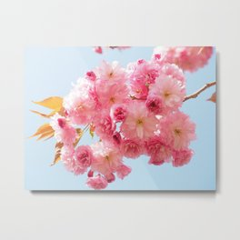 Cherry Blossoms in Pink Metal Print