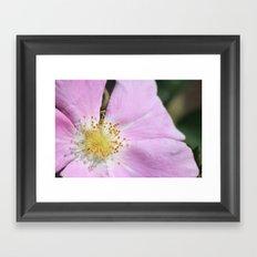 close up on flower Framed Art Print