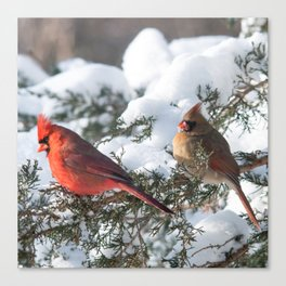 Sunny Winter Cardinals (square) Canvas Print