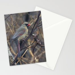 Female Northern Cardinal Stationery Cards