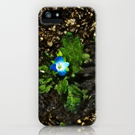 Persian Speedwell 3 iPhone Case