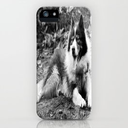 greenland dog iPhone Case