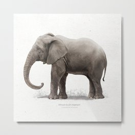 African elephant art print Metal Print