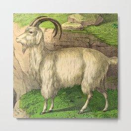 Goat Metal Print