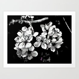 Spring Time Blossoms In Black And White Art Print