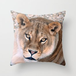 Lioness - Queen of a Pride of Lions  Throw Pillow