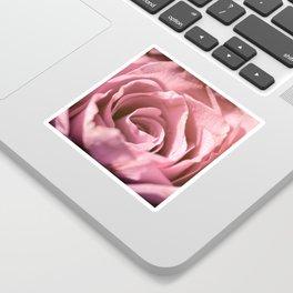 Pink Rose Macro Sticker