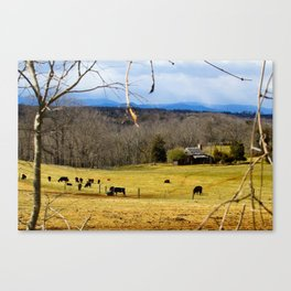 Cattle ranch overlooking the Blue Ridge Mountains Canvas Print