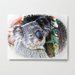 Koala smiling face Metal Print