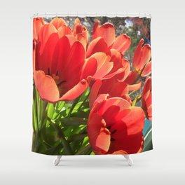 Orange Red Tulips Shower Curtain