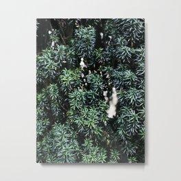 Evergreen tree Metal Print