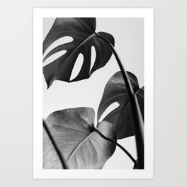 Black & white Monstera Art Print