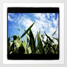 corn in summer Art Print