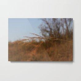 Stalk of Prairie Grass Metal Print