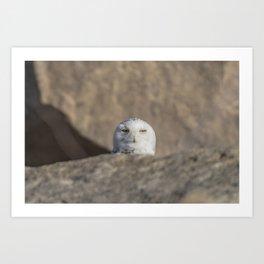 Peekaboo Snowy Owl Art Print