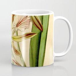 Encyclia phoenicea (as Epidendrum grahamii, spelled grahami) Curtis' 68 (N.S. 15) pl. 3885 (1842) Coffee Mug