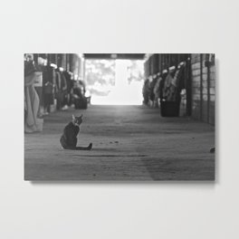 Cat in a barn Metal Print