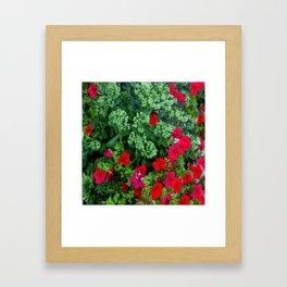 Red Petunia Flowers Green Sedum Flora Art Framed Art Print