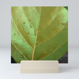 Sea Grape Leaf Mini Art Print