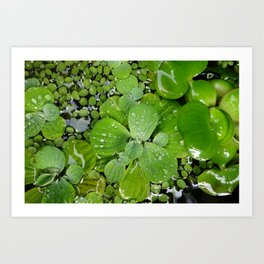 Water plants... Art Print