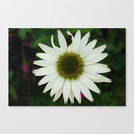 Broken Petal, Daisy Canvas Print