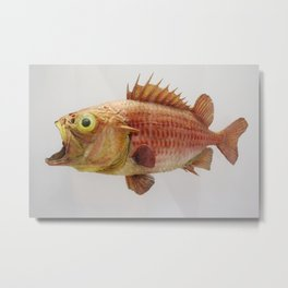 Puzzled Fish Metal Print