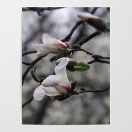 magnolia 05 textured paper edit Poster