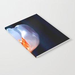 The Inner Light Notebook