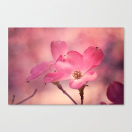 Colors of Spring: Pink Dogwood Canvas Print
