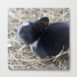 Black baby rabit in the hay AN02 Metal Print