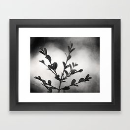 Black and White Nature Botanical Photography, Dark Grey Tree Branch, Neutral Gray Branches Framed Art Print