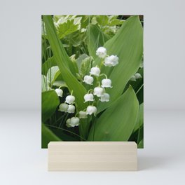 Pure White Lily of the Valley Flower Macro Photograph Mini Art Print