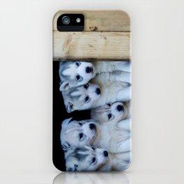 Husky puppies iPhone Case