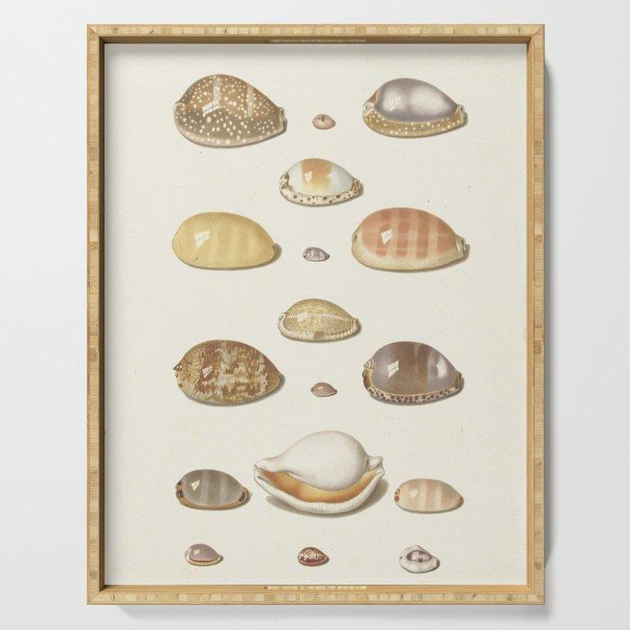 Vintage Seashell Chart I Serving Tray
