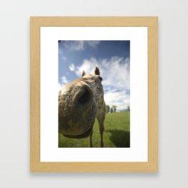 Horsing Around Framed Art Print