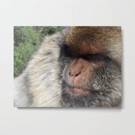 Gibraltar Barbary Ape Metal Print