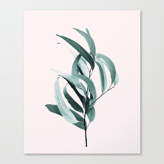 Eucalyptus II - Australian gum tree Canvas Print
