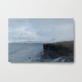 Coast of Iceland | Flying birds | Landscape Photography Metal Print