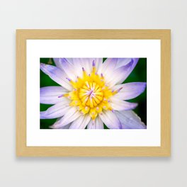 Flower photography by Hoover Tung Framed Art Print