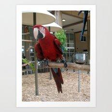 Macaw II Art Print