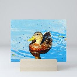 Duck in a pond Mini Art Print