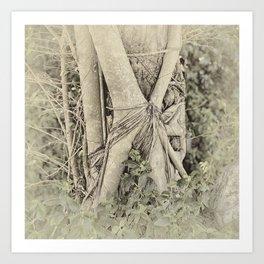 Strangler fig in forest Art Print