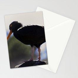 Black Oyster Catcher Stationery Cards