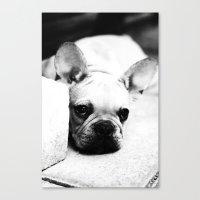 french bulldog Canvas Prints featuring French Bulldog by Falko Follert Art-FF77