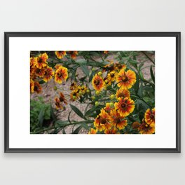 Young and Old Framed Art Print