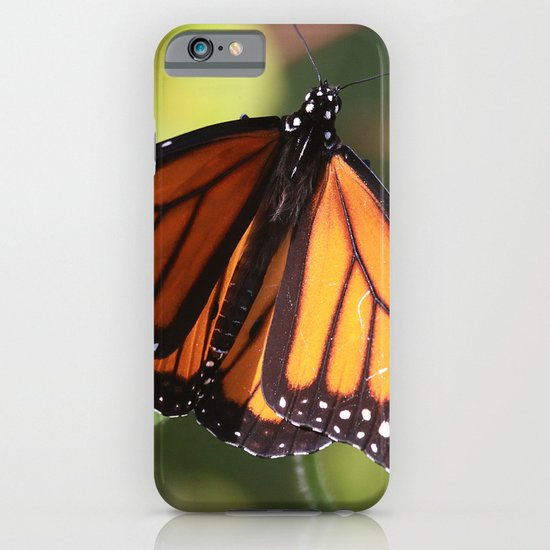 Monarch Butterfly iPhone & iPod Case