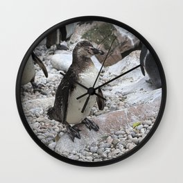 Cool dude - penguins, Colchester Zoo, UK Wall Clock